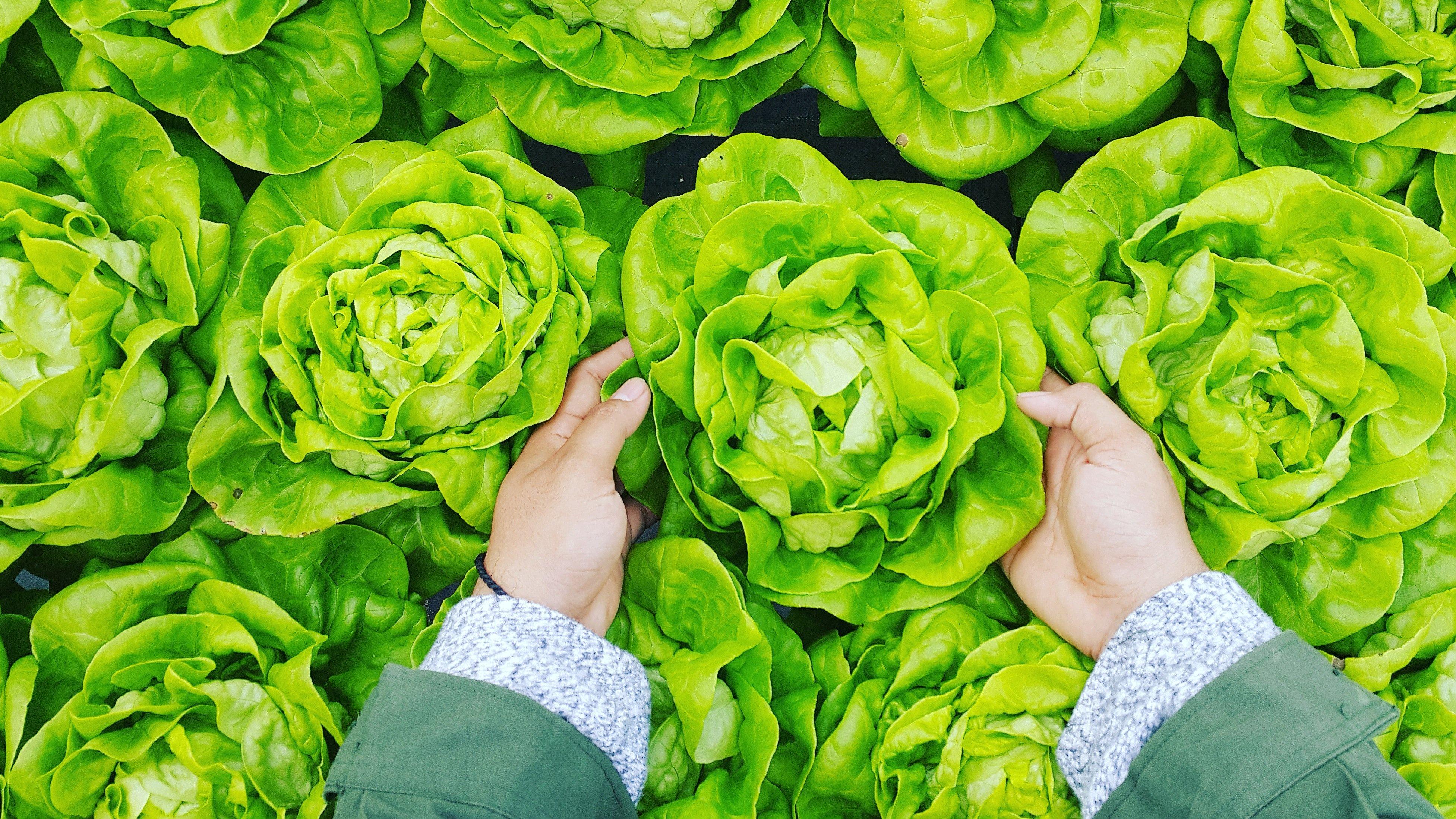Защо е важно да мием салатите?